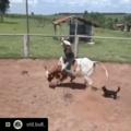 never saw tricks like that???