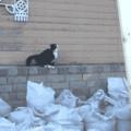Gato araña,gato araña :v(8)
