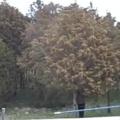 Essa Árvore não fez proerd
