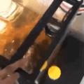 tartaruga foudasi
