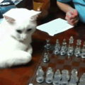 You can never win against catto