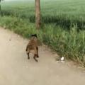 Fine, I'll fetch my own stick