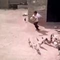 A fuga das galinhas