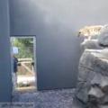 Gato otaku ao descobrir que paredes são feitas de semen.