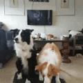 A cachorra dá uma piscada ainda