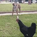 Run chato run!!