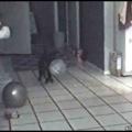 Catto got spooked