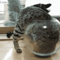 Mother cat: you can be anything       son cat: i want to be a goldfish